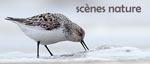 Scènes Nature Photographie